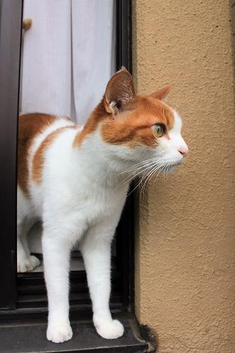 ブログNo.688(出窓猫、続き)8