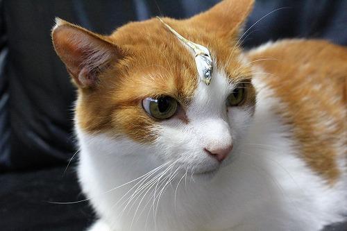 ブログNo.689(魚と猫)4