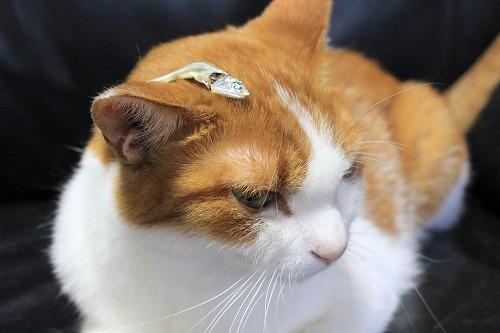ブログNo.689(魚と猫)10