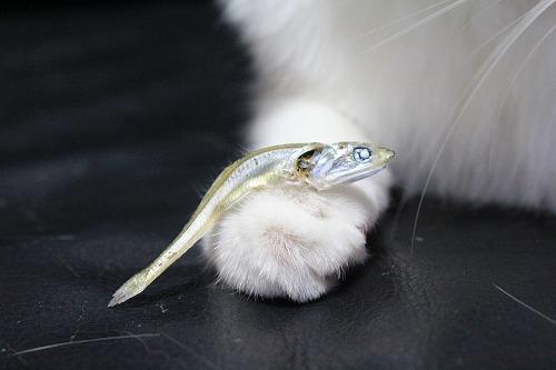 ブログNo.689(魚と猫)11