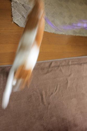 ブログNo.697(準備体操?)11
