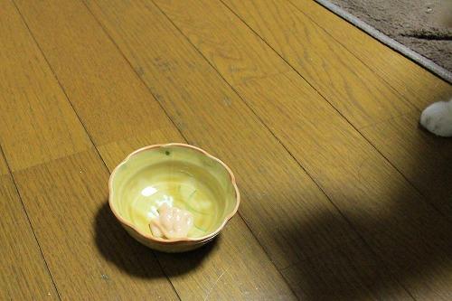 ブログNo.706(ちゅ~るの理想と現実)8