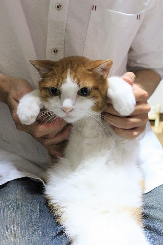 ブログNo.705簡単(困惑した猫)4