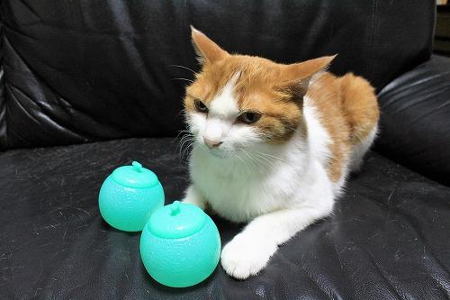 ブログNo.712(メロンアイスの入れ物と猫)1