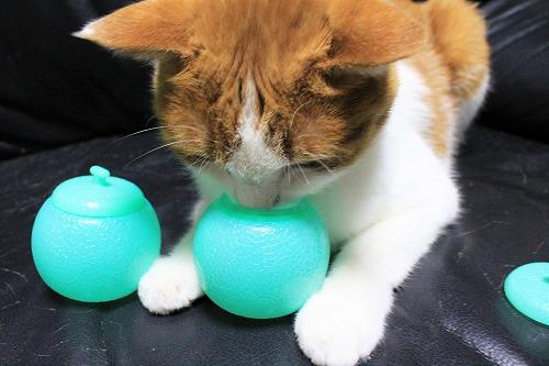 ブログNo.712(メロンアイスの入れ物と猫)2