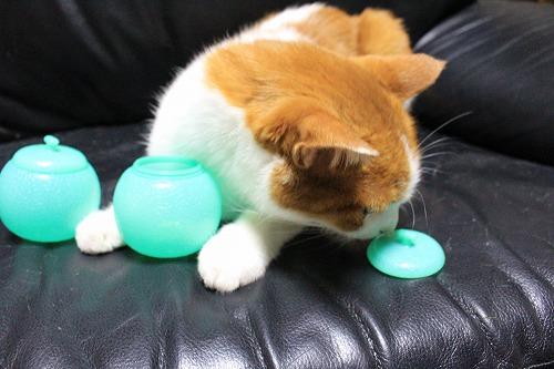 ブログNo.712(メロンアイスの入れ物と猫)3