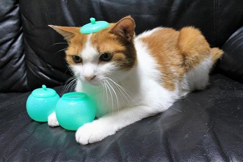 ブログNo.712(メロンアイスの入れ物と猫)5