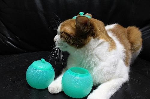 ブログNo.712(メロンアイスの入れ物と猫)6