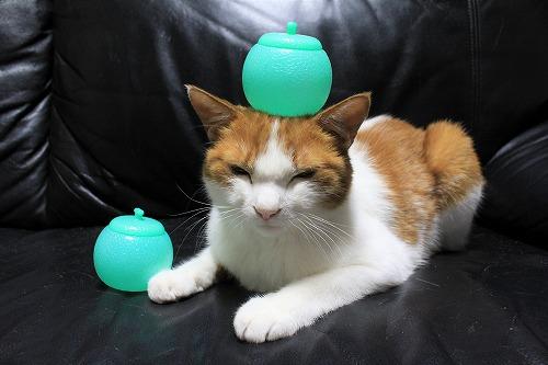 ブログNo.712(メロンアイスの入れ物と猫)7