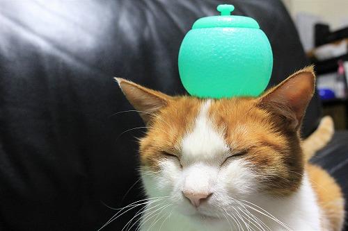 ブログNo.712(メロンアイスの入れ物と猫)8