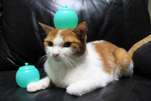 ブログNo.712(メロンアイスの入れ物と猫)9