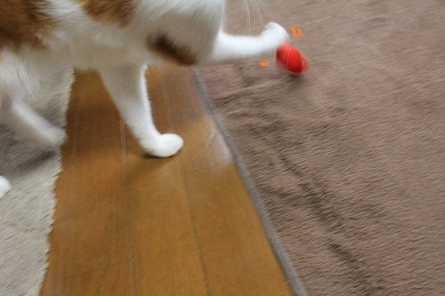 ブログNo.724(金魚のお手玉、あれあれ~?)2