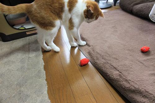 ブログNo.724(金魚のお手玉、あれあれ~?)7