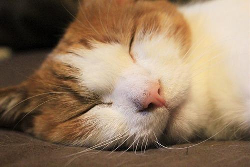 ブログNo.739(眠る瞬間)4