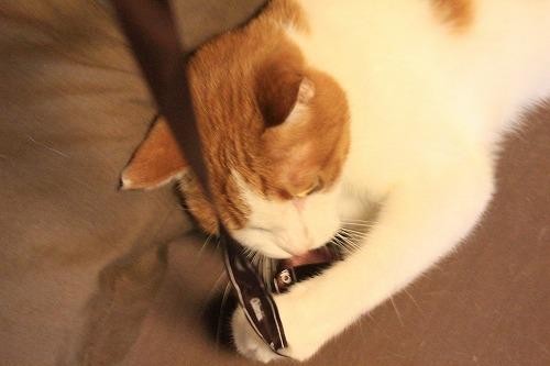ブログNo.735(寝転がったまま遊ぶ猫)9