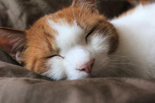 ブログNo.739(眠る瞬間)7
