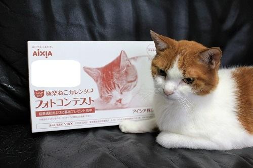 ブログNo.728(アイシアカレンダー結果に励ましてくれる猫)1