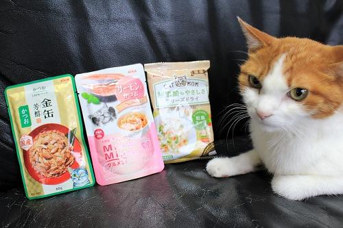 ブログNo.728(アイシアカレンダー結果に励ましてくれる猫)4