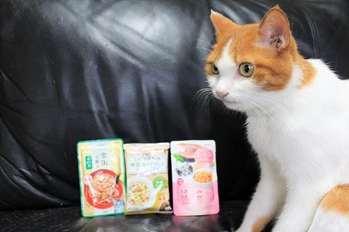 ブログNo.728(アイシアカレンダー結果に励ましてくれる猫)7