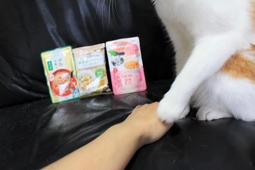 ブログNo.728(アイシアカレンダー結果に励ましてくれる猫)8