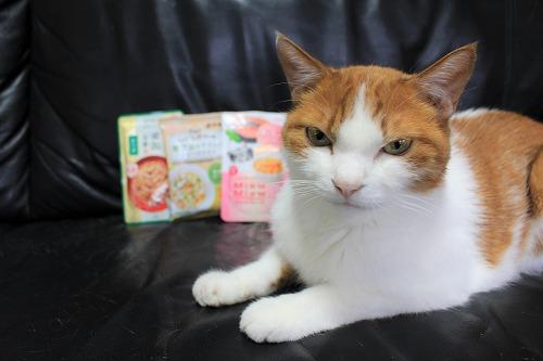 ブログNo.728(アイシアカレンダー結果に励ましてくれる猫)9