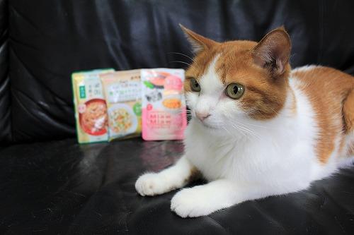 ブログNo.728(アイシアカレンダー結果に励ましてくれる猫)10