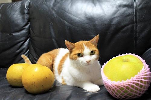 ブログNo.736(りんご梨と猫)1