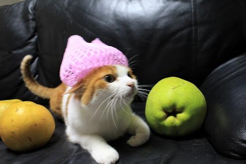 ブログNo.736(りんご梨と猫)2