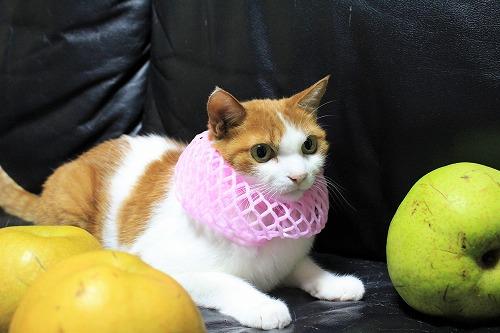 ブログNo.736(りんご梨と猫)4