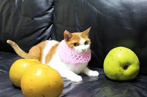 ブログNo.736(りんご梨と猫)5