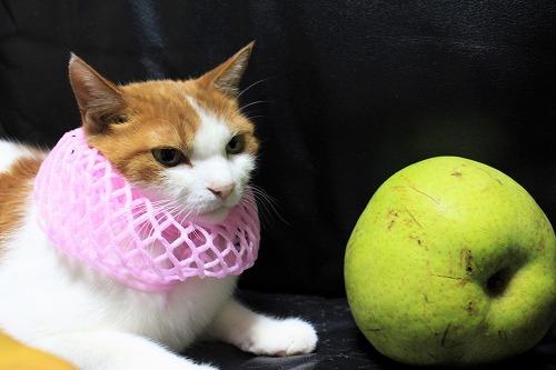 ブログNo.736(りんご梨と猫)6