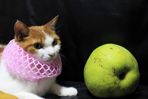 ブログNo.736(りんご梨と猫)7