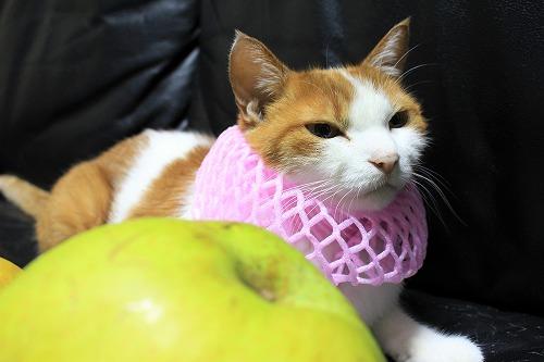 ブログNo.736(りんご梨と猫)9