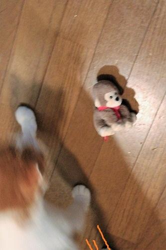 ブログNo.742(えっ!?お猿さんで遊ぶの?)1