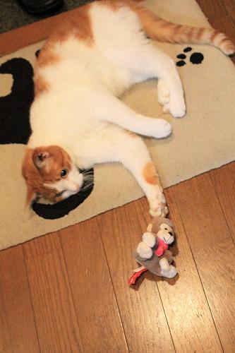 ブログNo.742(えっ!?お猿さんで遊ぶの?)6