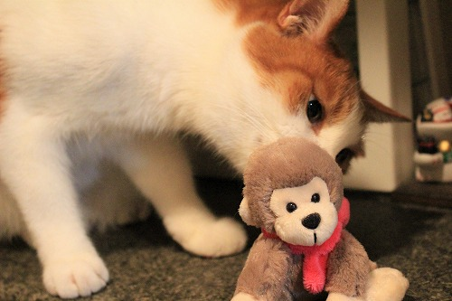 ブログNo.742(えっ!?お猿さんで遊ぶの?)9