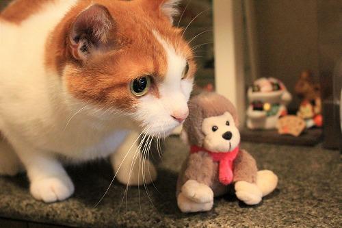 ブログNo.742(えっ!?お猿さんで遊ぶの?)10