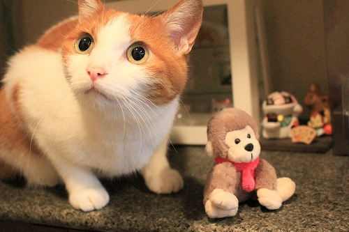 ブログNo.742(えっ!?お猿さんで遊ぶの?)11