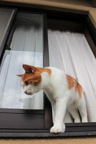 ブログNo.743(日向ぼっこ中の出窓を開けてみた)13