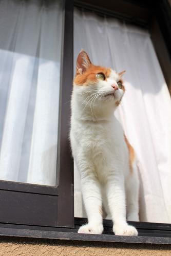 ブログNo.743(日向ぼっこ中の出窓を開けてみた)15