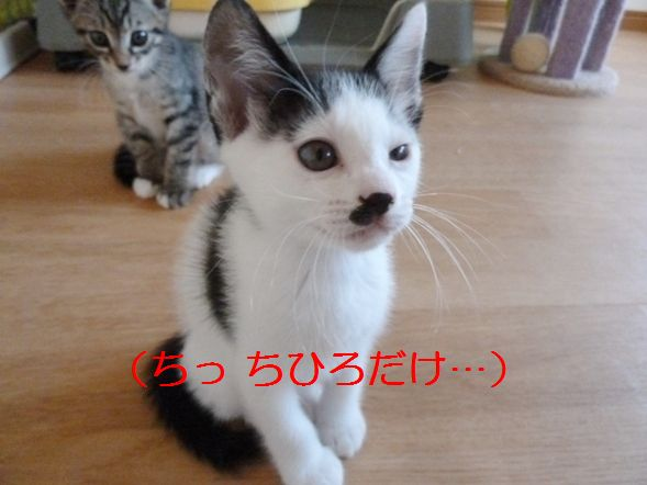 P1310468.jpg