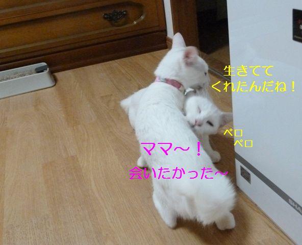 P1320142.jpg