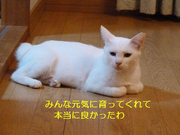 P1320145.jpg