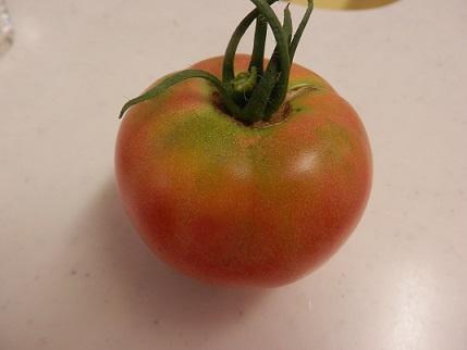 tomato20160718.jpg