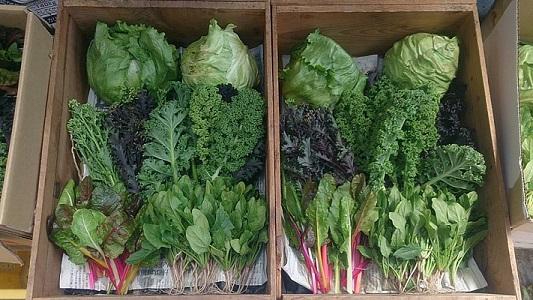 野菜セット0419