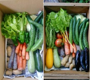 野菜セット0621