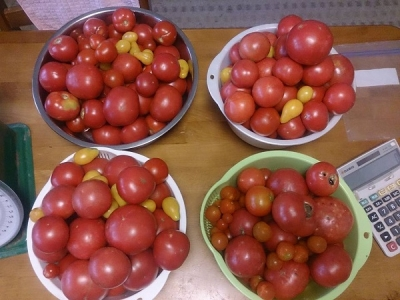 トマトピューレ001