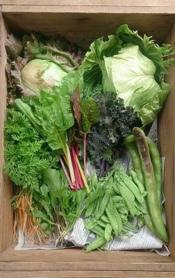 5月10日野菜セット