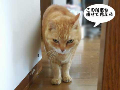 16_04_13_4.jpg