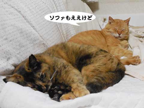 16_04_18_1.jpg